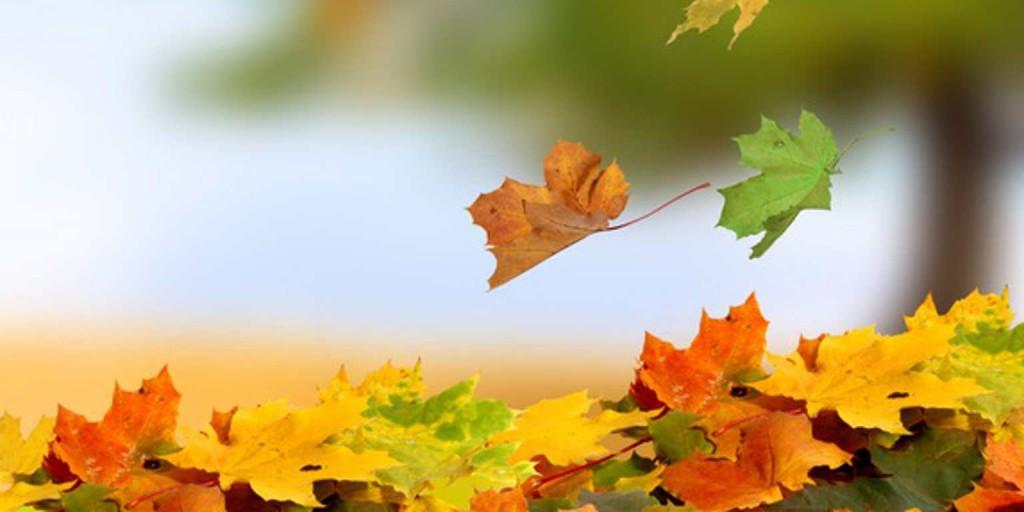 15220399 - autumn leaves